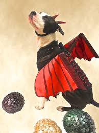 halloween costumes for yorkies dogs game of thrones dragon halloween pinterest dragons gaming