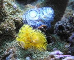 fish u0026 coral buy online home delivery special orders