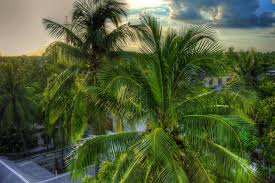 free images nature leaf vacation jungle botany delicious