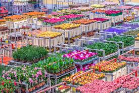 flower wholesale wholesale flowers plants and florist supplies to uk ireland