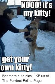 Cute Memes - ooo it s my kitty your get own kitty for more cute pics like us at