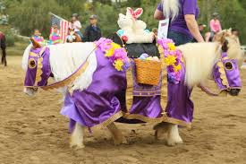 Halloween Costumes Horses Sale Dogs Halloween Costumes Video Dog Horse Costume Viewing Gallery