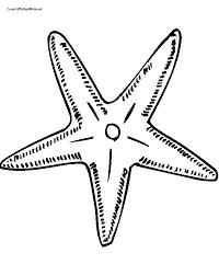 printable 36 starfish coloring pages 8704 star fish coloring
