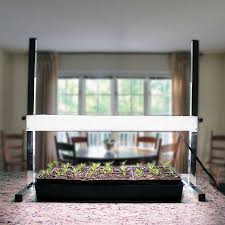 Kitchen Grow Lights Help For Stretched Seedlings Official Of Park Seed