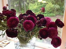 Burgundy Flowers 56 Best Burgundy Flowers Images On Pinterest Burgundy Flowers