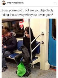 Crow Meme - goth crow meme by lone wolf69 memedroid