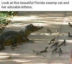 Crocodile Meme - 21 best alligators crocodiles images on pinterest alligators