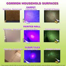 Purple Paint Law by Amazon Com Uv Flashlight Pet Urine Detector By Doggone Pet