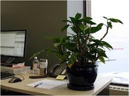 Indoor Plant For Office Desk Desk Plants Aglaonema Lipstick With Desk Plants Perfect Urban