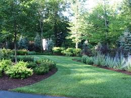 Best Trees For Backyard by Best 25 Natural Privacy Fences Ideas On Pinterest Privacy
