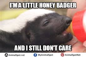 Honey Badger Memes - honey badger memes