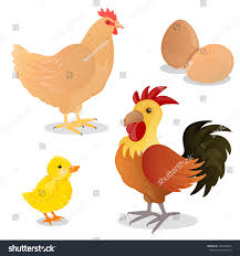 vector illustration rooster hen eggs stock vector 129349460