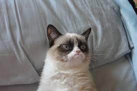 Grumpy Cat Meme No - no sleep grumpy cat meme generator