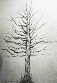 a pencil sketch of an oak tree quercus alba for chibird