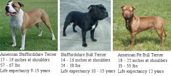 american pitbull a terrier misidentified misjudged and misunderstood pit bull awareness