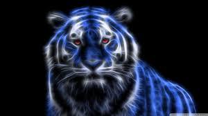 blue glowing tiger hd desktop wallpaper widescreen high