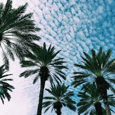 California Cool Scents Tropicana Free 1pc Palm Hang Outs Aroma Rand buttermilk skies and beautifully spread palm trees
