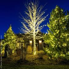 outdoor lighting in trees the union co