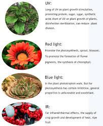 what color light do plants grow best in bossled 2000w full spectrum led grow light bossled best led grow