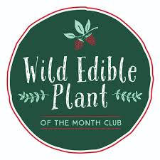 plant of the month club edible plant of the month club