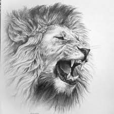 awesome drawings lions roaring lion pencil drawing