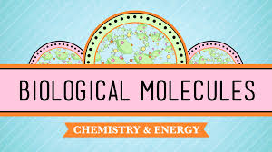biological molecules you are what you eat crash course biology