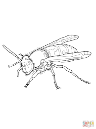 european wasp coloring page free printable coloring pages