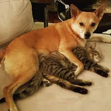 Cat Instagram 19 Super Cute Photos Of Cats And Dogs Being Bffs