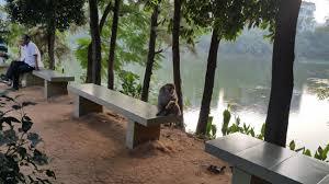Monkey Bench Urban Monkeys Of Dhaka Video The Daily Star