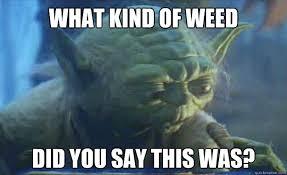Funny Yoda Memes - contemplating yoda memes quickmeme