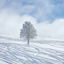 lonely tree covered in snow wallpaper
