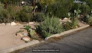 tucson native plants sustainable living tucson rain in tucson a reason to celebrate