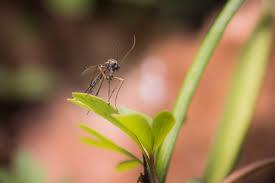 mosquito squad of victoria tx blog