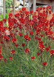 26 best container gardening full sun images on pinterest