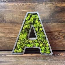 Natural Home Decor Living Moss In Interior Design 25 Ideas And Care Tips Home