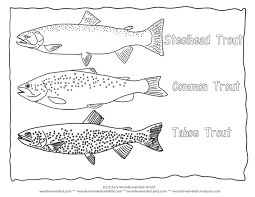 salmon fish coloring page trout coloring page collectionfrom our wonderweirded fish coloring