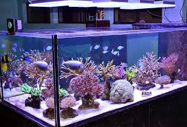 led reef aquarium lighting sps reef aquarium leds the minimalist nyc