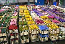 wholesale flowers liverpool wholesale flowers plants merseyside wholesale