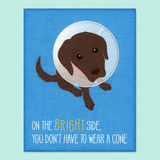 get better cards dog greeting card get well soon card get well