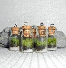 20 best mini plants images on pinterest mini plants mini
