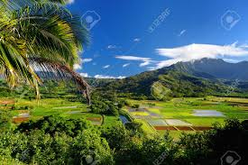 Hawaii vegetaion images Taro fields in beautiful hanalei valley on kauai island hawaii jpg