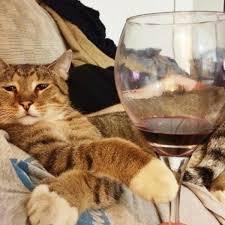 Drunk Cat Meme - cat wine make your own catnip wine cat wine buying guide