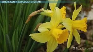 what is dermal tissue definition u0026 function video u0026 lesson