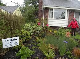 native plants for rain gardens rainwater gardens preventing toxic runoff into puget sound knkx