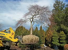 how to buy a perfectly peculiar tree nytimes