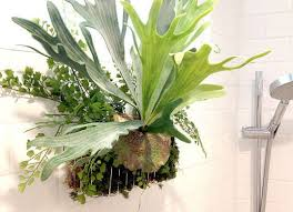 Best Plants For Bathrooms Best 25 Best Plants For Bedroom Ideas On Pinterest Air