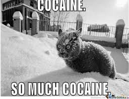 So Much Cocaine Meme - so much cocaine by fabian meme center