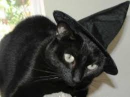 Halloween Costumes Cats Ghoul Cats 10 Freakiest Scariest Halloween Cat