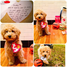 puppy halloween costume for baby a real beanie baby u2013 my goldendoodle on halloween u2013 you bet your