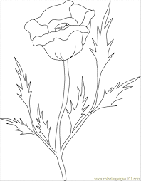 poppy clr coloring free flowers coloring pages